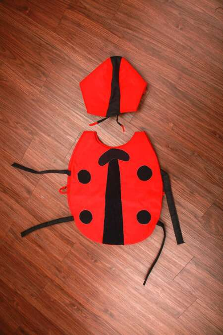 Lady Bug fancy dress Costume